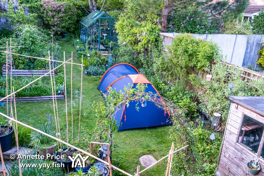 Garden camping in Wokingham, Berkshire, UK.