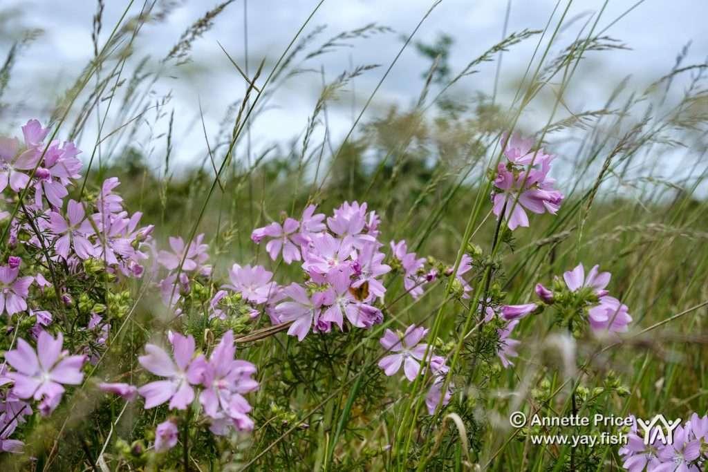 Wild flowers in a meadow. Hazeley Lea in Hampshire. UK.