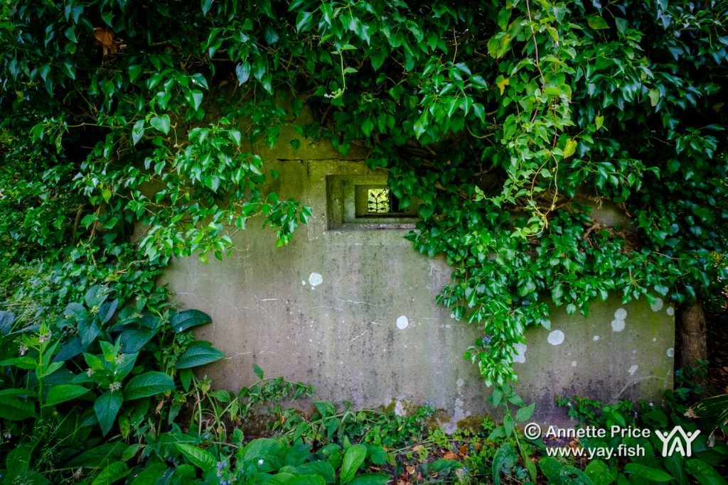 Wartime Pillbox. Dipley Mill, Hartley Wintney, Hook, Hampshire. UK.