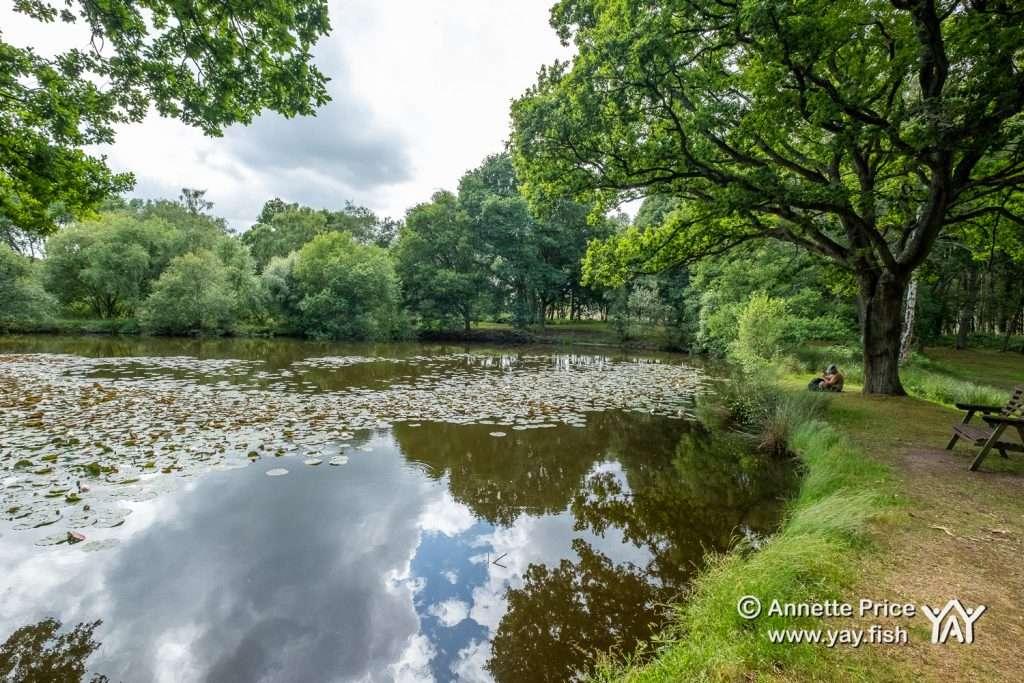 Hazeley Heath, Hampshire, UK.