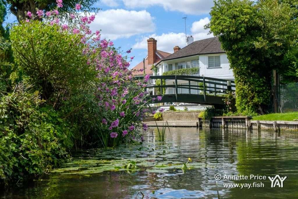 Hennerton Backwater near Wargrave UK 12 7 20 48
