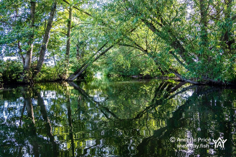 Paddling the Thames in Berkshire | Enjoy this enchanting and beautiful backwater paddle.