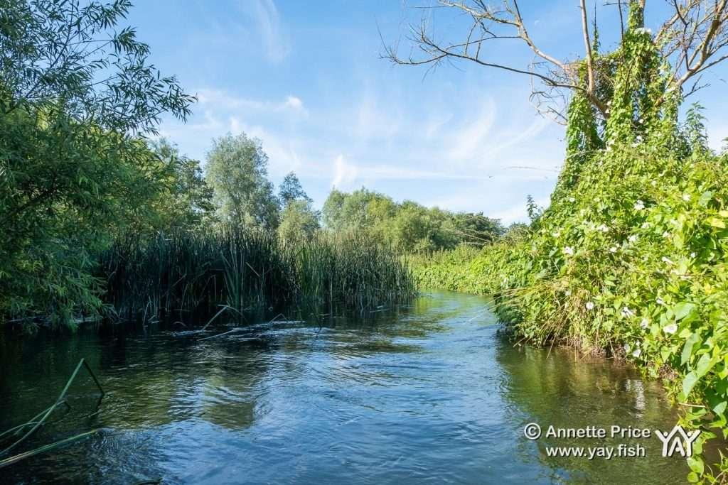 St Patricks Stream near Shiplake UK 12 7 20 29